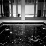 <!--:en-->The frozen pool<!--:-->